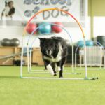 School of Dog